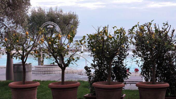 Come coltivare limoni sul balcone museogambarina for Limoni in vaso